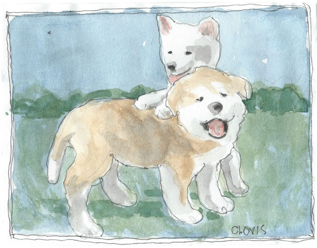 """Akita,"" a Bring-a-Smile watercolor by Clovis Heimsath, artist"