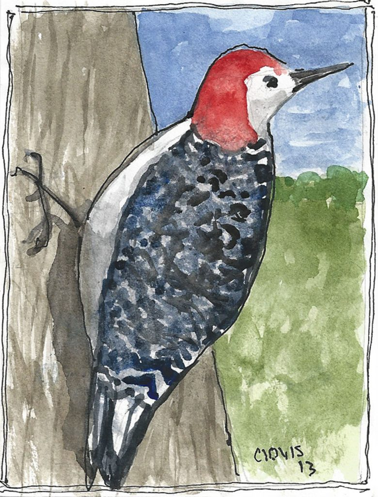 """Another Woodpecker,"" a Bring-a-Smile watercolor by Clovis Heimsath, artist"