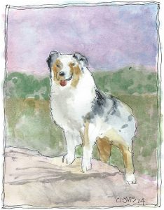 """Australian Sheep Dog,"" a Bring-a-Smile watercolor by Clovis Heimsath, artist"
