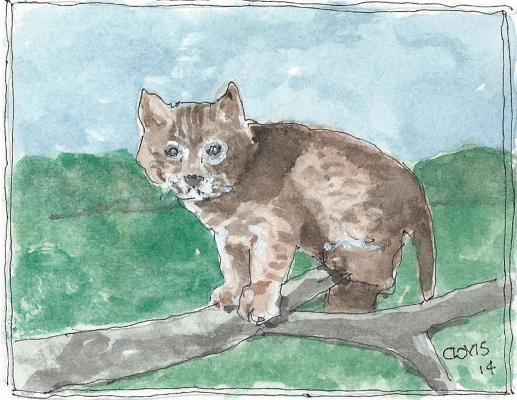 """Baby Bobcat,"" a Bring-a-Smile watercolor by Clovis Heimsath, artist"