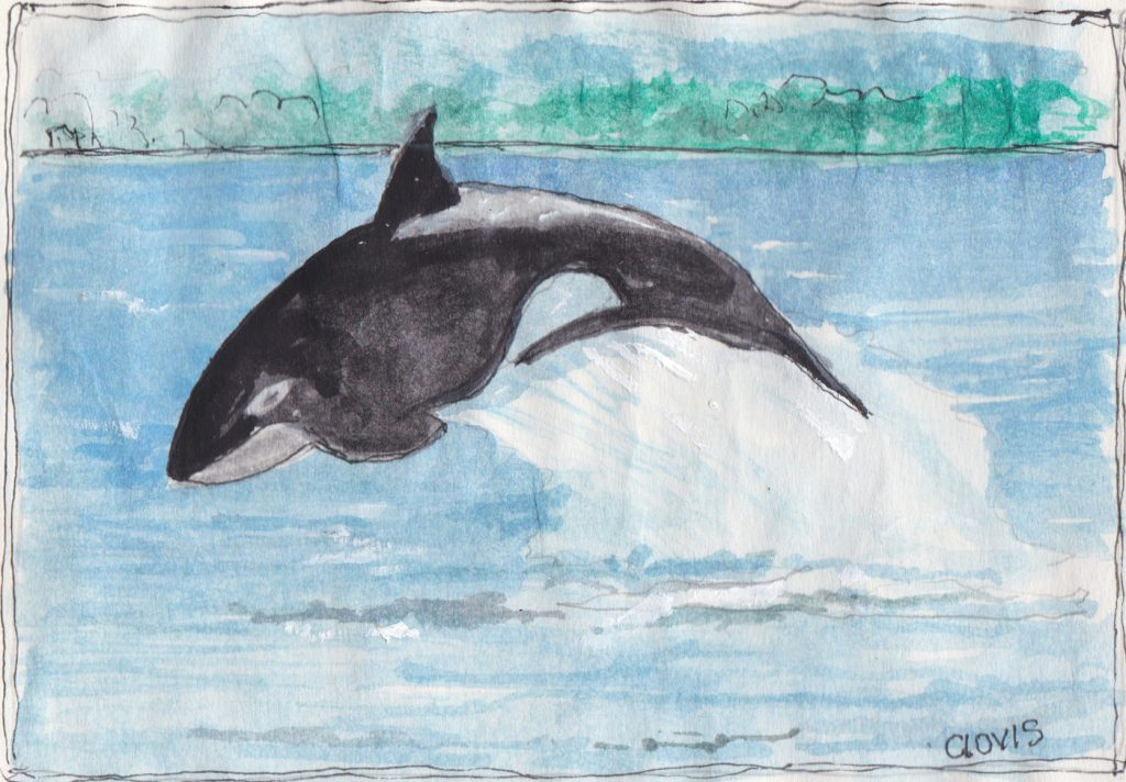 """Baby Whale,"" a Bring-a-Smile watercolor by Clovis Heimsath, artist"