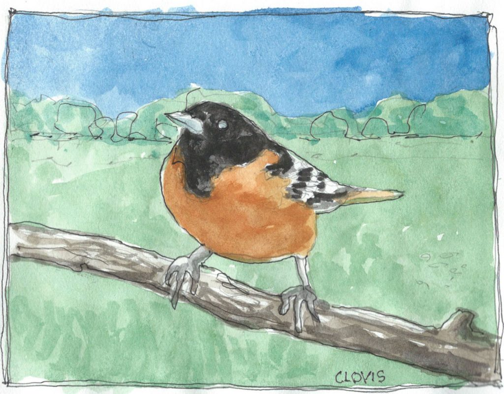 """Baltimore Oriole,"" a Bring-a-Smile watercolor by Clovis Heimsath, artist"
