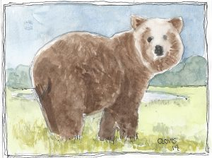 """Bear Ps,"" a Bring-a-Smile watercolor by Clovis Heimsath, artist"