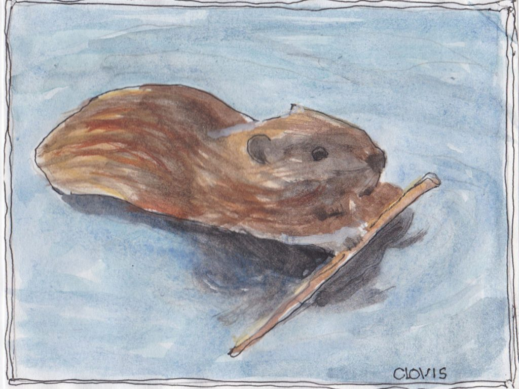 """Beaver 2,"" a Bring-a-Smile watercolor by Clovis Heimsath, artist"