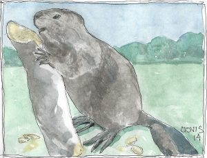 """Beaver,"" a Bring-a-Smile watercolor by Clovis Heimsath, artist"