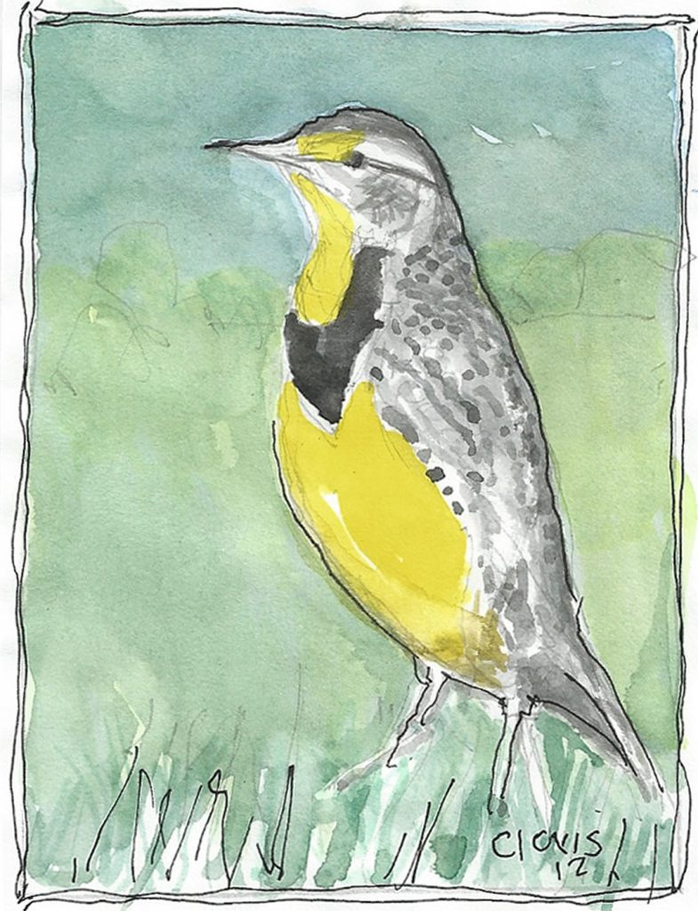 """Bird Yellow Woodpecker 202,"" a Bring-a-Smile watercolor by Clovis Heimsath, artist"