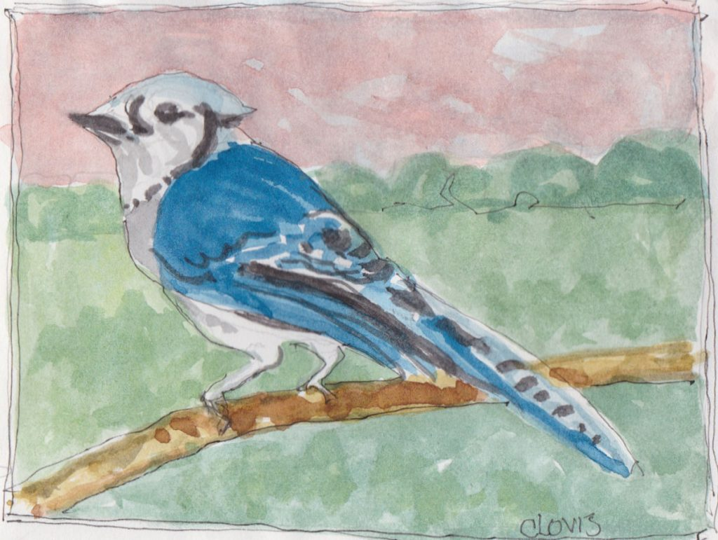 """Blue Jay 2,"" a Bring-a-Smile watercolor by Clovis Heimsath, artist"