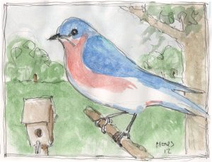 """Bluebird,"" a Bring-a-Smile watercolor by Clovis Heimsath, artist"