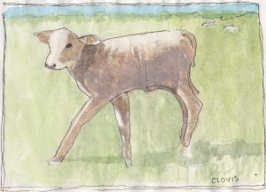 """Brown Calf 2,"" a Bring-a-Smile watercolor by Clovis Heimsath, artist"
