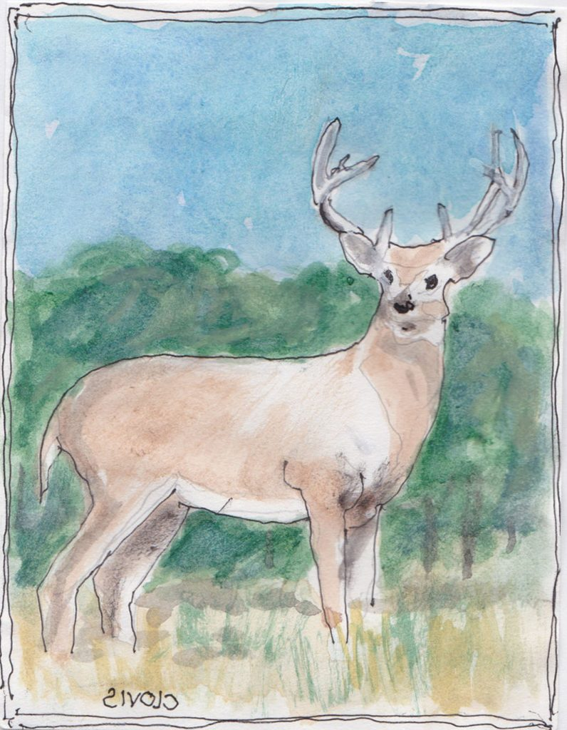 """Buck,"" a Bring-a-Smile watercolor by Clovis Heimsath, artist"