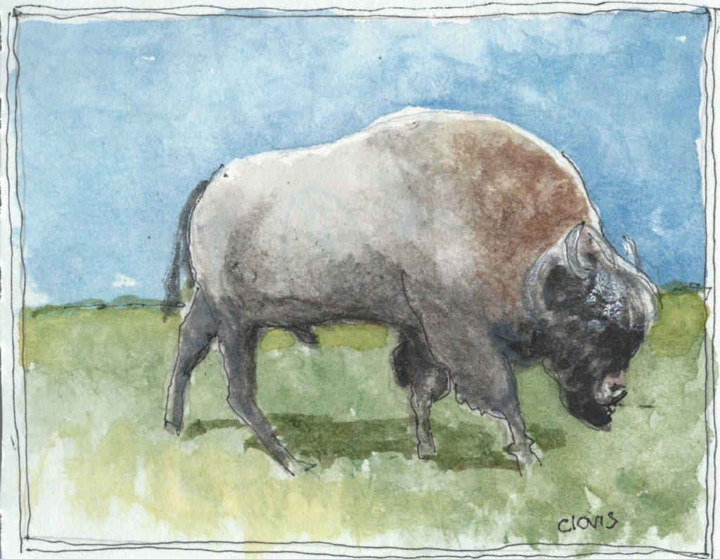 """Buffalo,"" a Bring-a-Smile watercolor by Clovis Heimsath, artist"