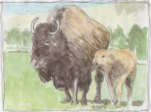 """Buffalo 3,"" a Bring-a-Smile watercolor by Clovis Heimsath, artist"