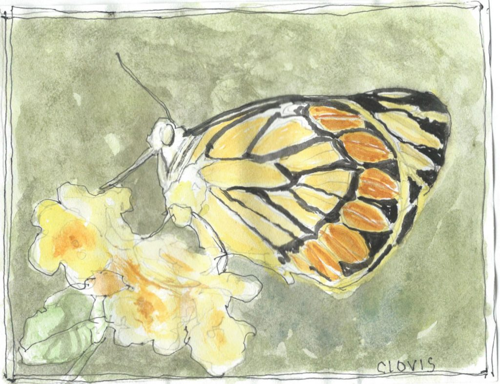"""Butterfly New,"" a Bring-a-Smile watercolor by Clovis Heimsath, artist"