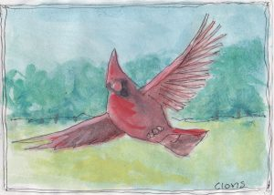 """Cardinal Flying,"" a Bring-a-Smile watercolor by Clovis Heimsath, artist"