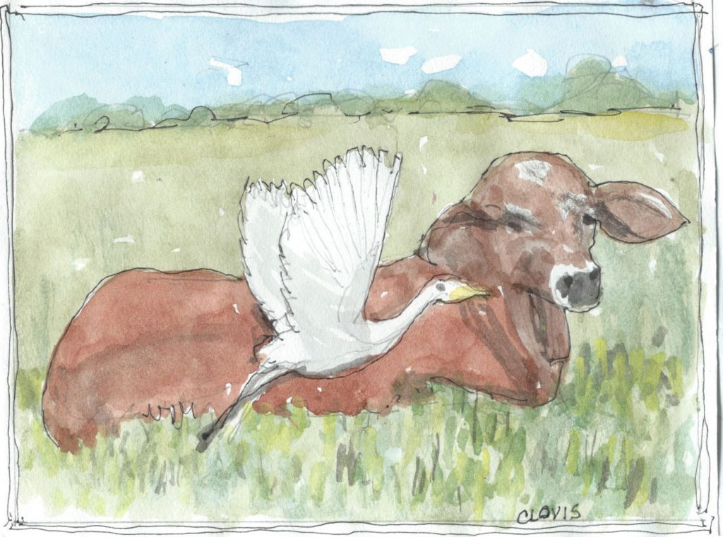 """Cattle Egret,"" a Bring-a-Smile watercolor by Clovis Heimsath, artist"