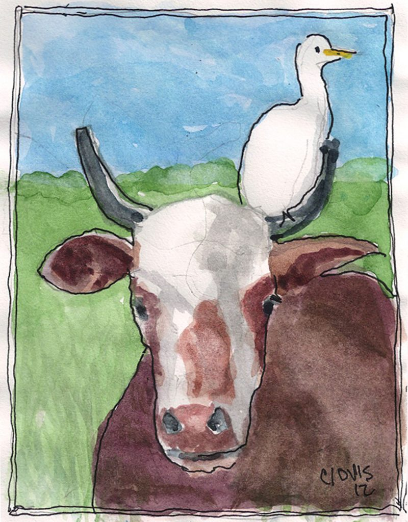 """Cattle Egret 2,"" a Bring-a-Smile watercolor by Clovis Heimsath, artist"