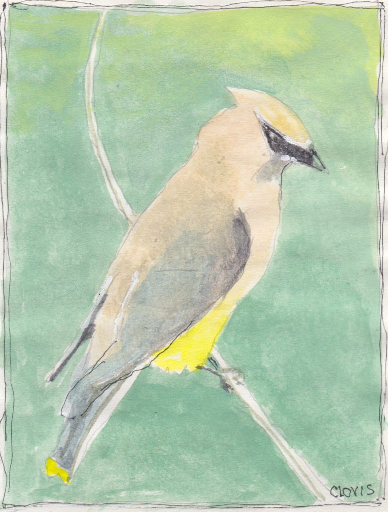 """Cedar Wax Wing,"" a Bring-a-Smile watercolor by Clovis Heimsath, artist"