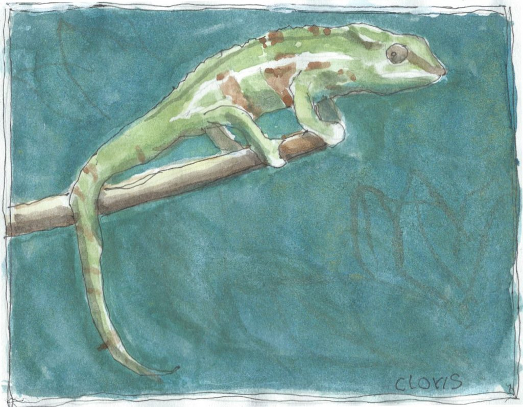 """Chameleon 3,"" a Bring-a-Smile watercolor by Clovis Heimsath, artist"