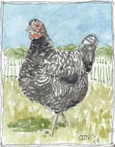 """Chicken 3,"" a Bring-a-Smile watercolor by Clovis Heimsath, artist"