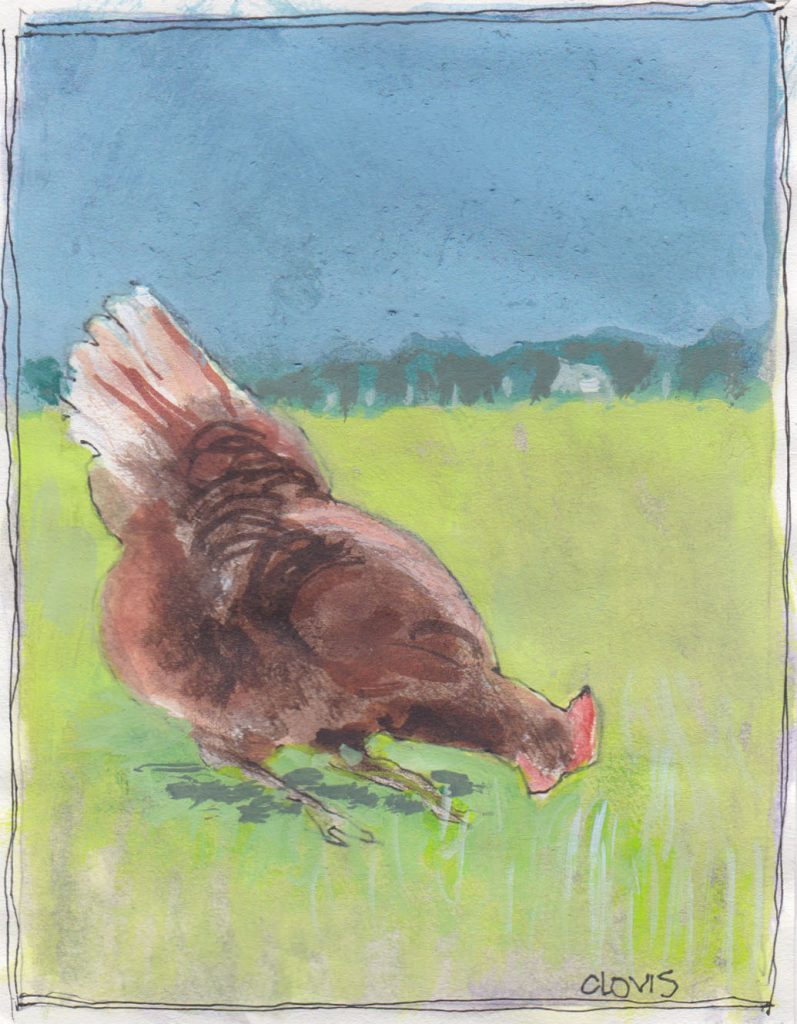 """Chicken 6,"" a Bring-a-Smile watercolor by Clovis Heimsath, artist"