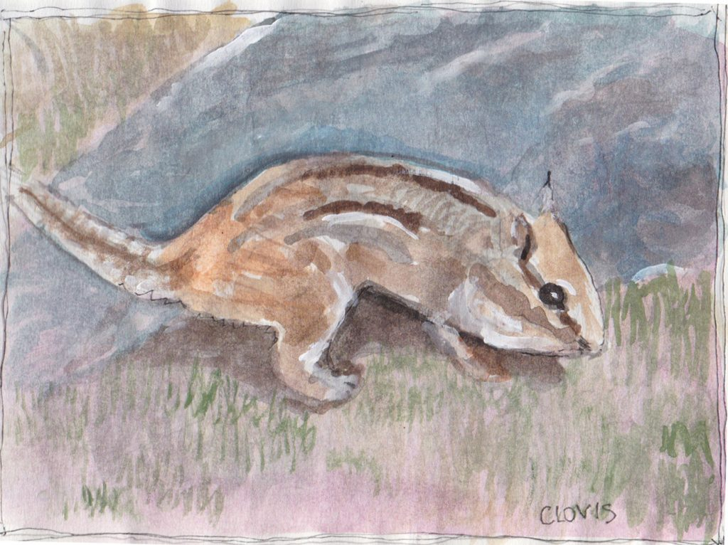 """Chipmunk 3,"" a Bring-a-Smile watercolor by Clovis Heimsath, artist"