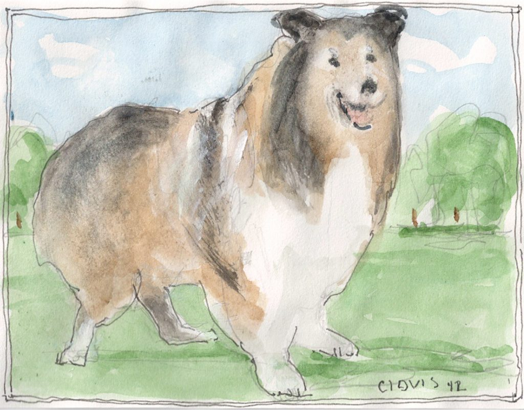 """Collie 2,"" a Bring-a-Smile watercolor by Clovis Heimsath, artist"