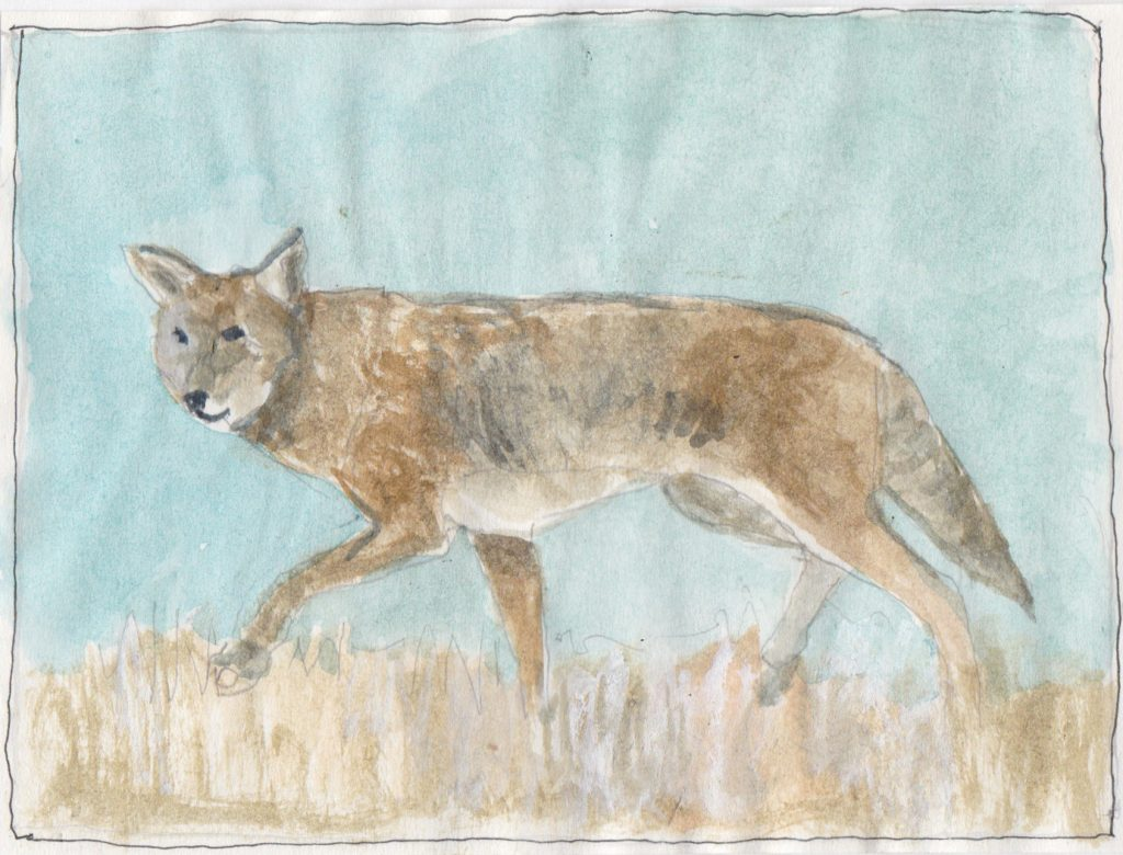 """Coyote ,"" a Bring-a-Smile watercolor by Clovis Heimsath, artist"