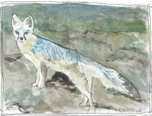 """Desert Fox ,"" a Bring-a-Smile watercolor by Clovis Heimsath, artist"