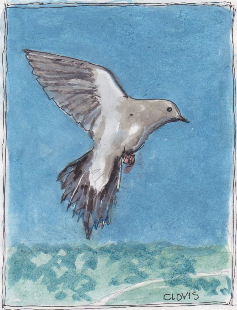 """Dove 2,"" a Bring-a-Smile watercolor by Clovis Heimsath, artist"