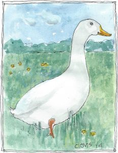 """Duck 6 7,"" a Bring-a-Smile watercolor by Clovis Heimsath, artist"