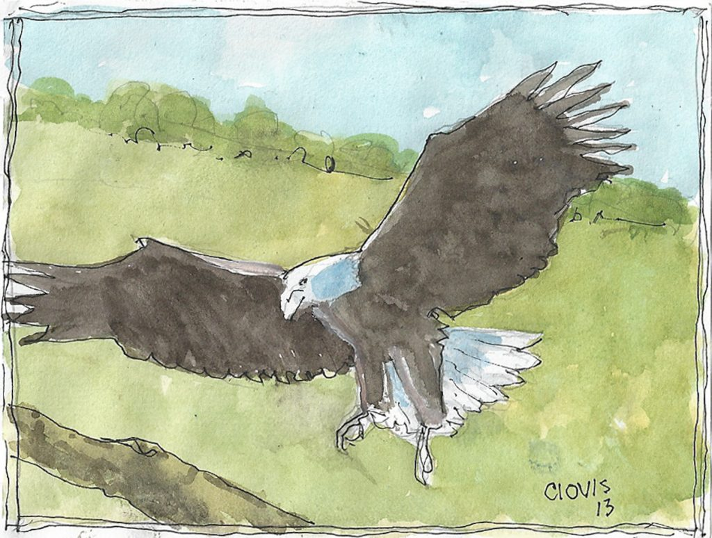 """Eagle 2,"" a Bring-a-Smile watercolor by Clovis Heimsath, artist"