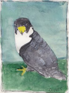 """Falcon,"" a Bring-a-Smile watercolor by Clovis Heimsath, artist"