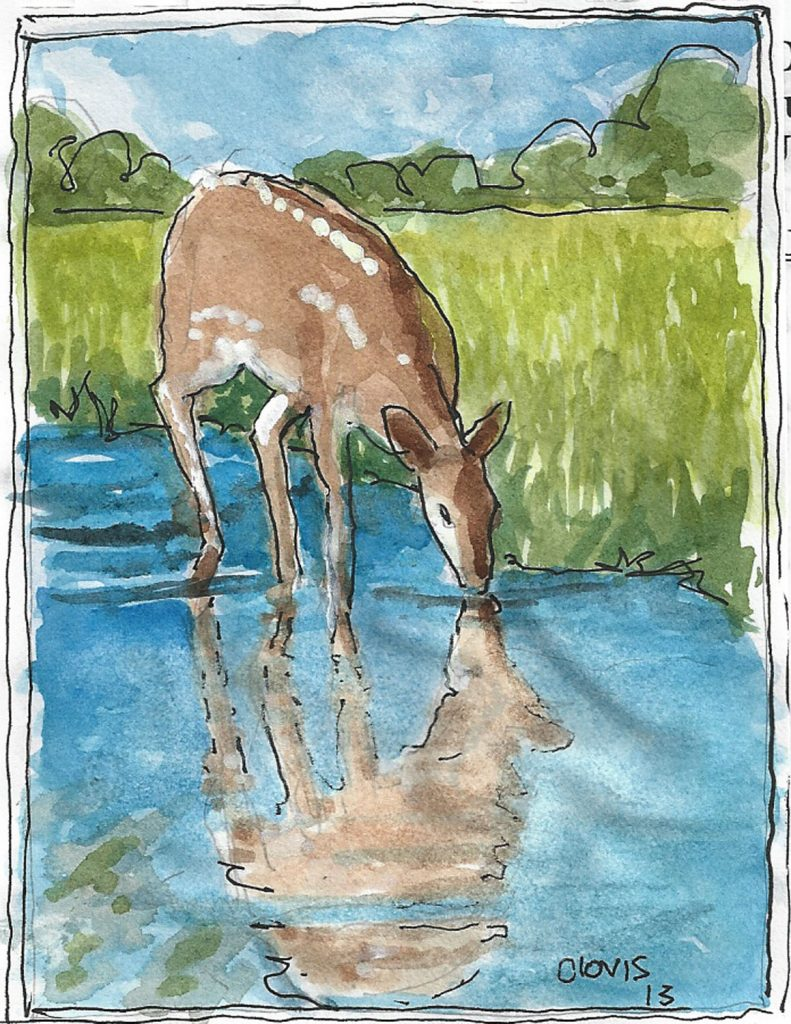 """Fawn,"" a Bring-a-Smile watercolor by Clovis Heimsath, artist"