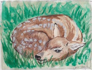 """Fawn Connor,"" a Bring-a-Smile watercolor by Connor Heimsath, artist"