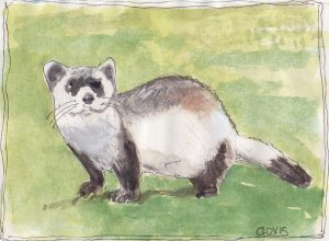 """Ferret,"" a Bring-a-Smile watercolor by Clovis Heimsath, artist"
