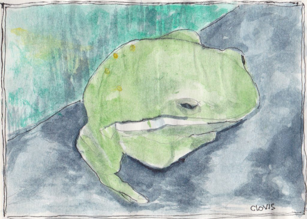 """Frog 2,"" a Bring-a-Smile watercolor by Clovis Heimsath, artist"