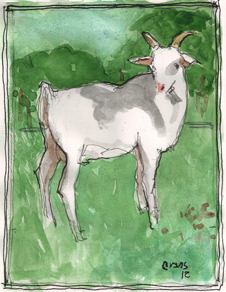 """Goat 2,"" a Bring-a-Smile watercolor by Clovis Heimsath, artist"