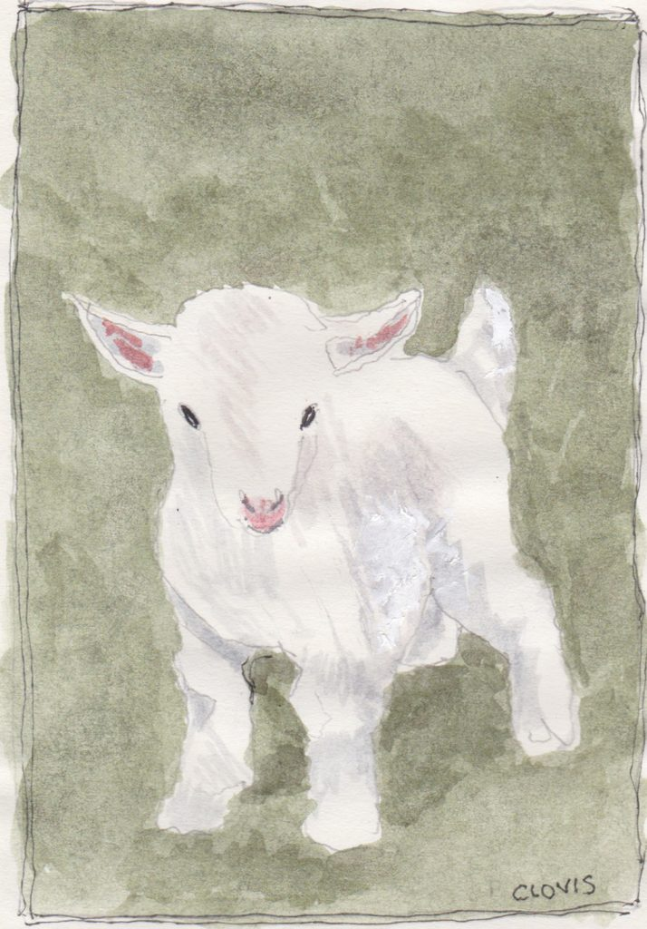"""Goat Kid L,"" a Bring-a-Smile watercolor by Clovis Heimsath, artist"