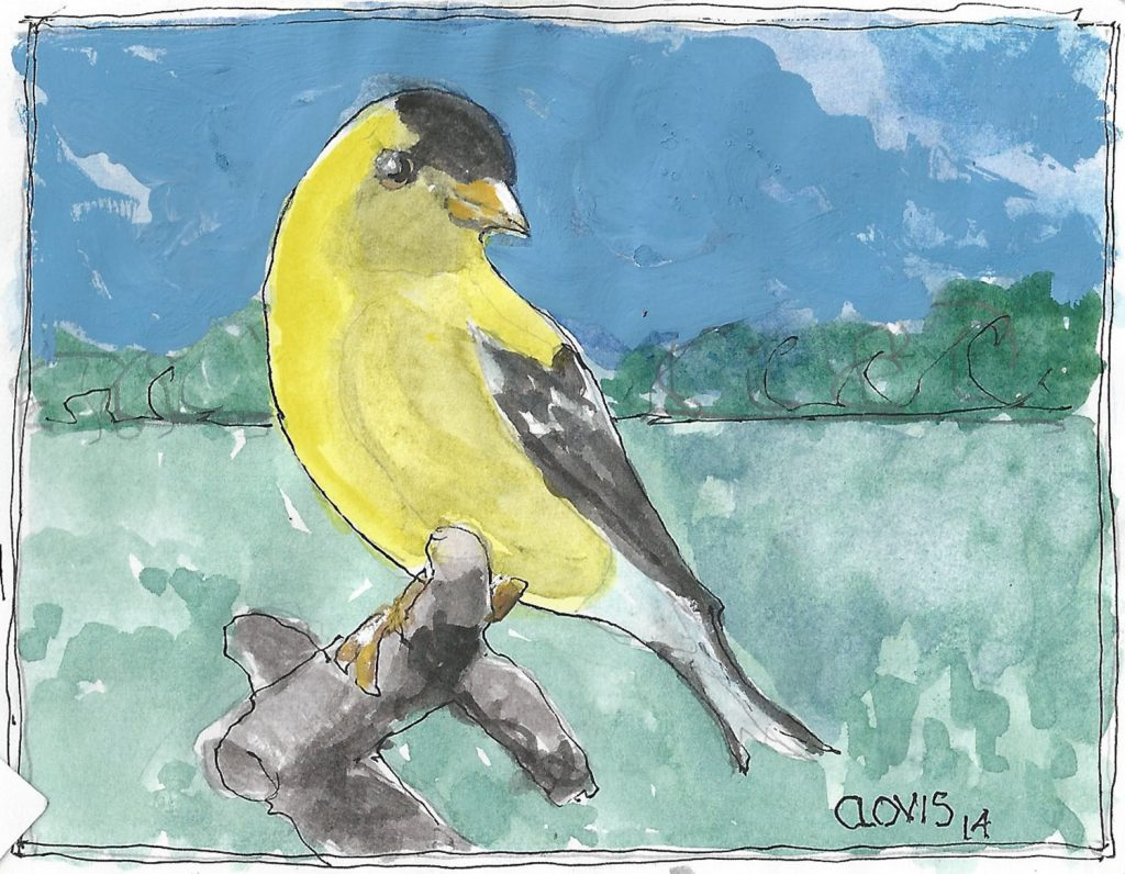 """Goldfinch 3 2,"" a Bring-a-Smile watercolor by Clovis Heimsath, artist"