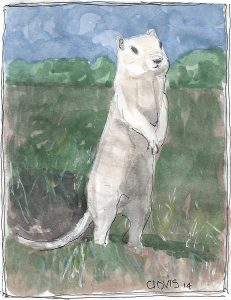 """Gopher,"" a Bring-a-Smile watercolor by Clovis Heimsath, artist"
