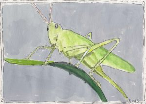 """Grasshopper 3,"" a Bring-a-Smile watercolor by Clovis Heimsath, artist"