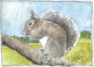 """Gray Squirrel,"" a Bring-a-Smile watercolor by Clovis Heimsath, artist"
