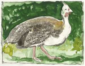 """Guinea Hen,"" a Bring-a-Smile watercolor by Clovis Heimsath, artist"