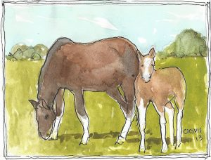 """Horse And Colt,"" a Bring-a-Smile watercolor by Clovis Heimsath, artist"