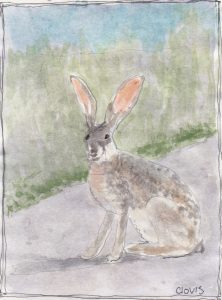 """Jack Rabbit 3,"" a Bring-a-Smile watercolor by Clovis Heimsath, artist"