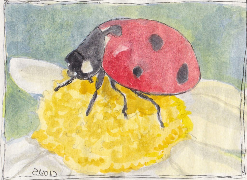 """Ladybug 2,"" a Bring-a-Smile watercolor by Clovis Heimsath, artist"