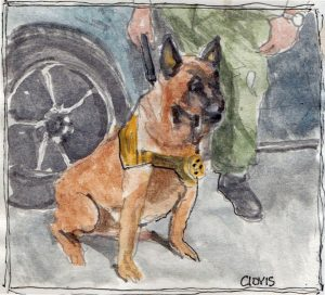 """Lobo 3,"" a Bring-a-Smile watercolor by Clovis Heimsath, artist"
