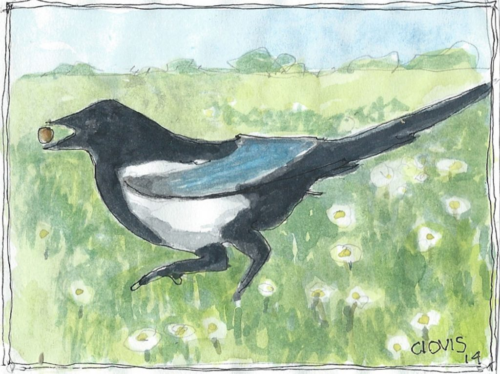 """Magpie,"" a Bring-a-Smile watercolor by Clovis Heimsath, artist"