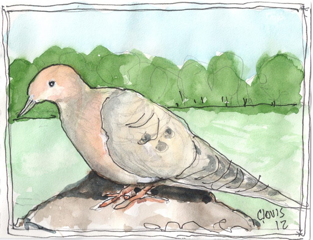 """Mourning Dove,"" a Bring-a-Smile watercolor by Clovis Heimsath, artist"