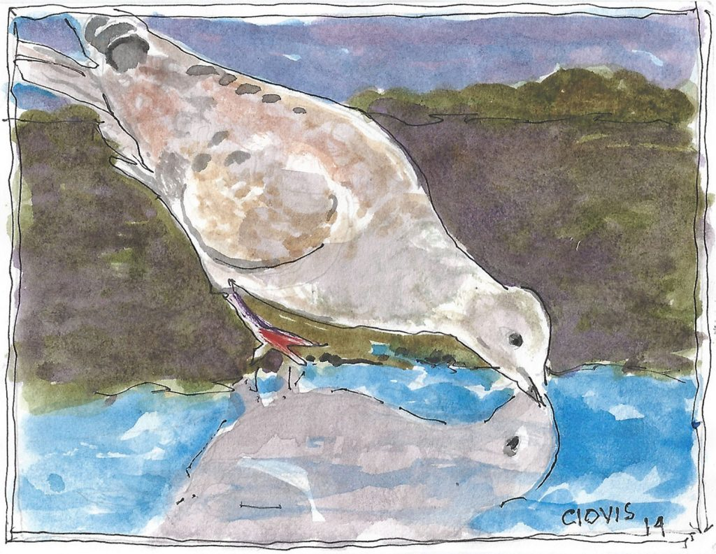 """Mourning Dove 2,"" a Bring-a-Smile watercolor by Clovis Heimsath, artist"